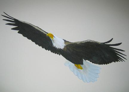 Taking Flight in 2011 (1/6)