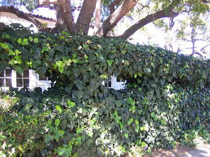 Hedge Funz (1/6)