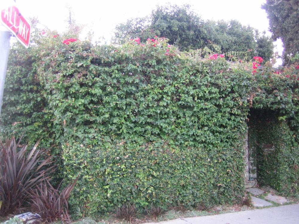 Hedge Funz (6/6)